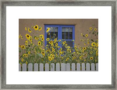 Sunflowers Bloom In A Garden Framed Print by Ralph Lee Hopkins