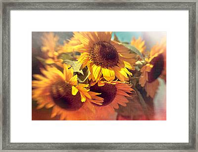 Sunflowers Framed Print by Boston Thek Imagery