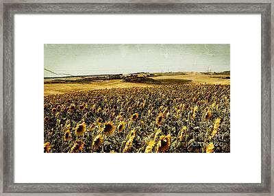 Sunflowers Field  Framed Print by Anja Freak