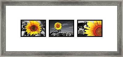 Sunflowers Framed Print by Sumit Mehndiratta