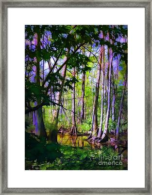 Sunlight In The Swamp Framed Print by Judi Bagwell