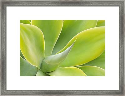 Sunlit Agave Framed Print by Heidi Smith