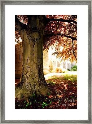 Sunlit Church Framed Print by HD Connelly