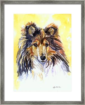 Sunny Sheltie Framed Print by Lyn Cook