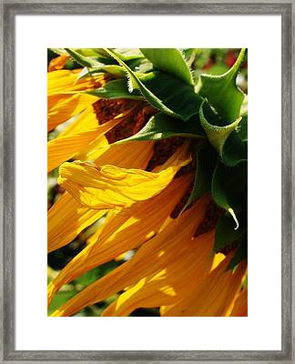 Sunny Times Framed Print by Bruce Bley