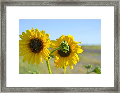 Sunnyside Up Framed Print by Teresa Dixon