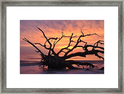 Sunrise At Driftwood Beach 6.1 Framed Print by Bruce Gourley