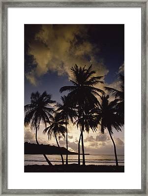 Sunrise At La Sagesse Bay Over Marquis Framed Print by Gerry Ellis
