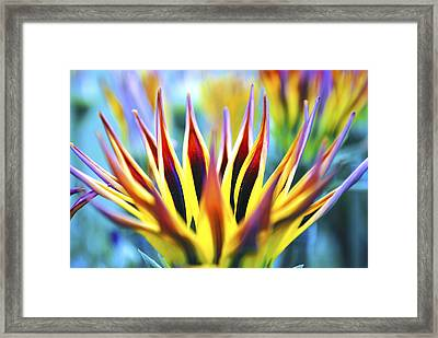 Sunrise Flower Framed Print by Sumit Mehndiratta