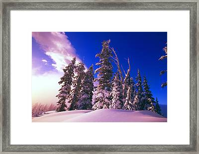 Sunrise Over Snow-covered Pine Trees Framed Print by Natural Selection Craig Tuttle
