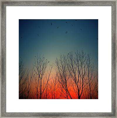Sunset Behind Trees Framed Print by Luis Mariano González