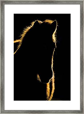Sunset Horse Silhouette Canada Framed Print by Mark Duffy