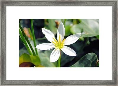 Sunshine Framed Print by
