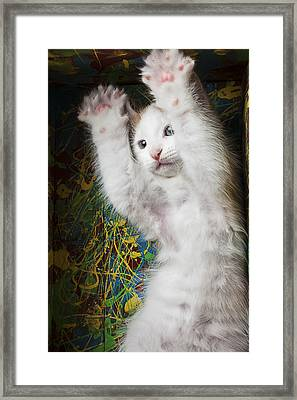 Surprise Framed Print by Garry Gay