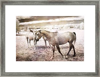 Surreal Horses Dreamy Infrared Landscape Framed Print by Kathy Fornal