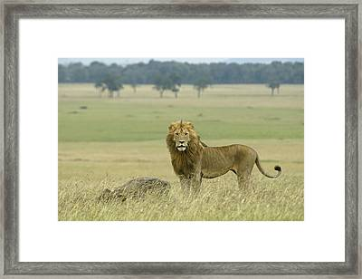 Surveying His Kingdom Framed Print by Michele Burgess