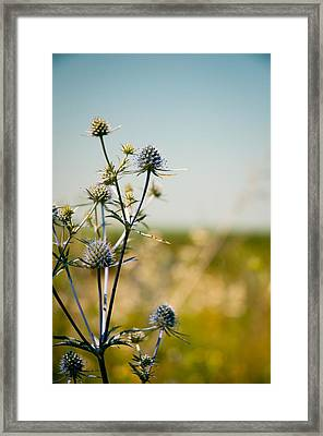 Survive Framed Print by Sasha Gurkova