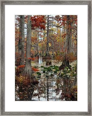 Swamp In Fall Framed Print by Marty Koch