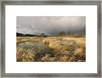 Swampland Framed Print by Robert Lacy