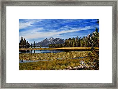 Swan Lake Framed Print by Robert Bales