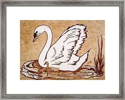 Swan With Chick Original Coffee Painting Framed Print by Georgeta  Blanaru