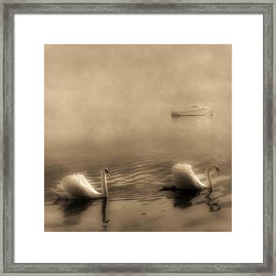 Swans Framed Print by Joana Kruse
