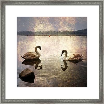 swans on Lake Varese in Italy Framed Print by Joana Kruse