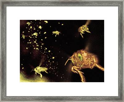 Swarm Of Bees Framed Print by Ian Cuming