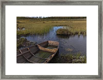 Swedish Swamp Framed Print by Heiko Koehrer-Wagner