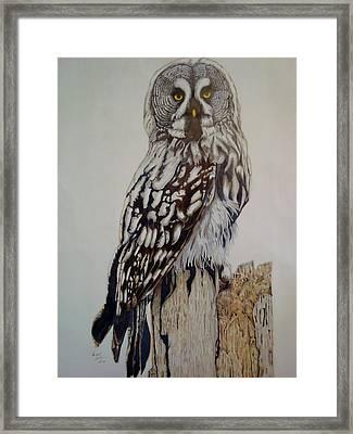 Swedish Uwl Framed Print by Per-erik Sjogren