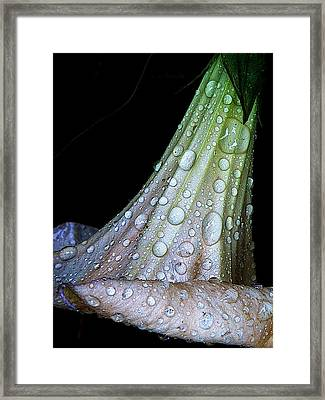 Sweet And Rainy Framed Print by Chris Berry