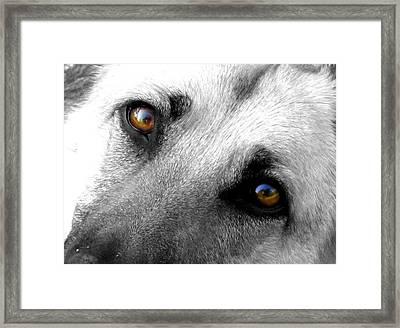Sweet Eyes Framed Print by Trish Clark