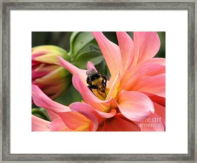 Sweet Nectar Framed Print by Rory Sagner