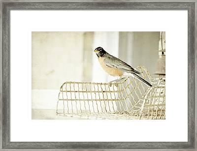 Sweet Robin Framed Print by Kim Klassen Photography