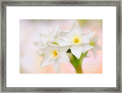 Sweet Spring Framed Print by Jacky Parker