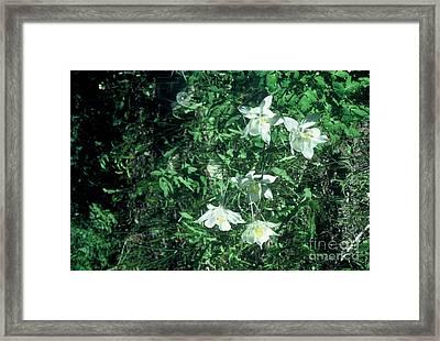 Sweet Summer Framed Print by Alcina Morello