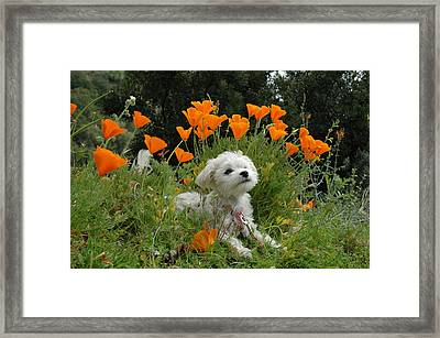 Sweet Sunshine Framed Print by Lynn Bauer