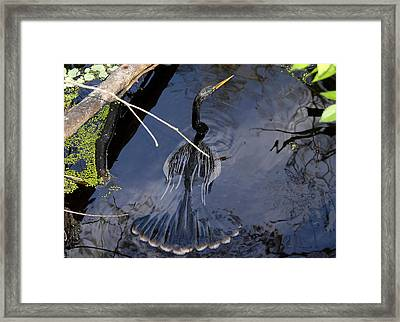 Swimming Bird Framed Print by David Lee Thompson