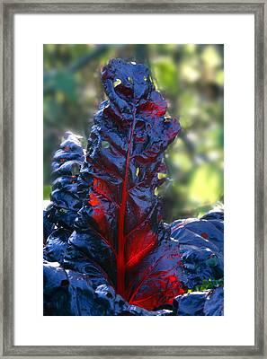 Swiss Chard (beta 'bull's Blood') Framed Print by Dr Keith Wheeler