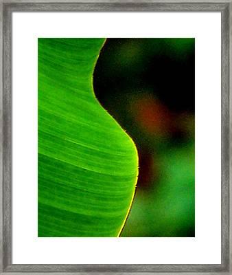 Symmetry Framed Print by Steven Huszar
