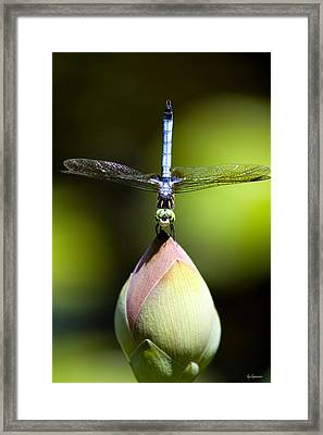 T Shape Framed Print by Lisa  Spencer