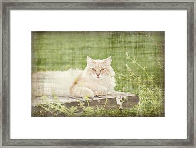 Tabitha  Framed Print by Susan Bordelon