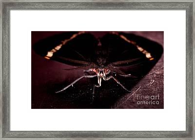 Take A Moment Framed Print by Venura Herath