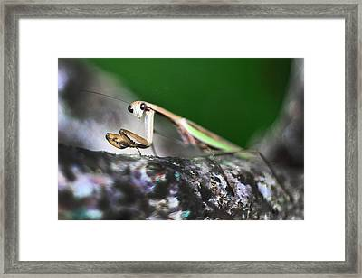 Take Me To Your Leader Framed Print by Lisa Sorrell