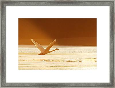 Takeoff At Sunset Framed Print by Larry Ricker