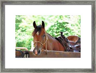 Taking A Break Framed Print by Jan Amiss Photography