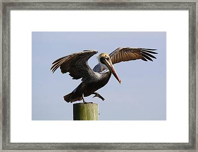Taking A Leap Of Faith Framed Print by Paulette Thomas