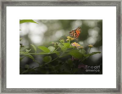 Talk To Me Framed Print by Kim Henderson