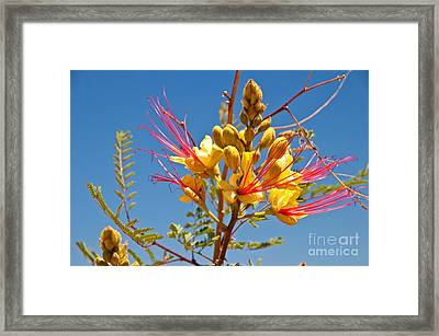 Tall And Bright Framed Print by Bob and Nancy Kendrick