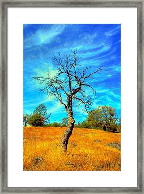 Tall Bare Tree With White Clouds And Blue Sky. Framed Print by Gregory Dean